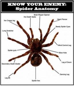 Shelob Spider Costume Anatomy